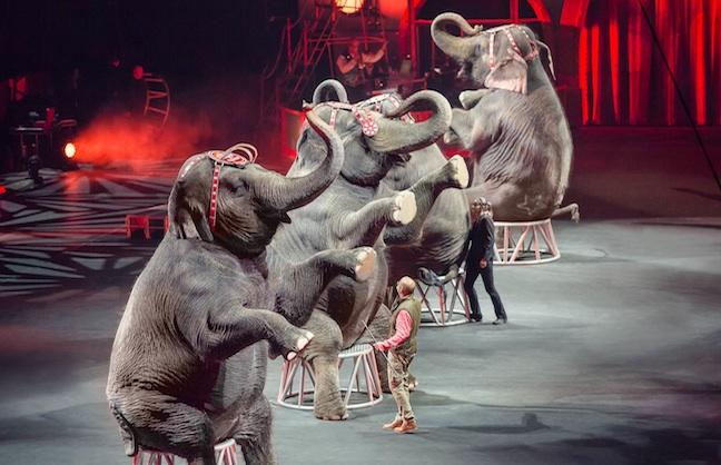 Elephants Move to Florida Farm May 1