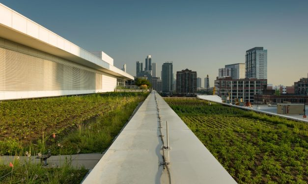 McCormick Place Rooftop Garden Growing Strong
